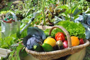 Ovoce a zelenina v košíku