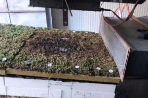 Výsledek požární zkoušky na zelené střeše