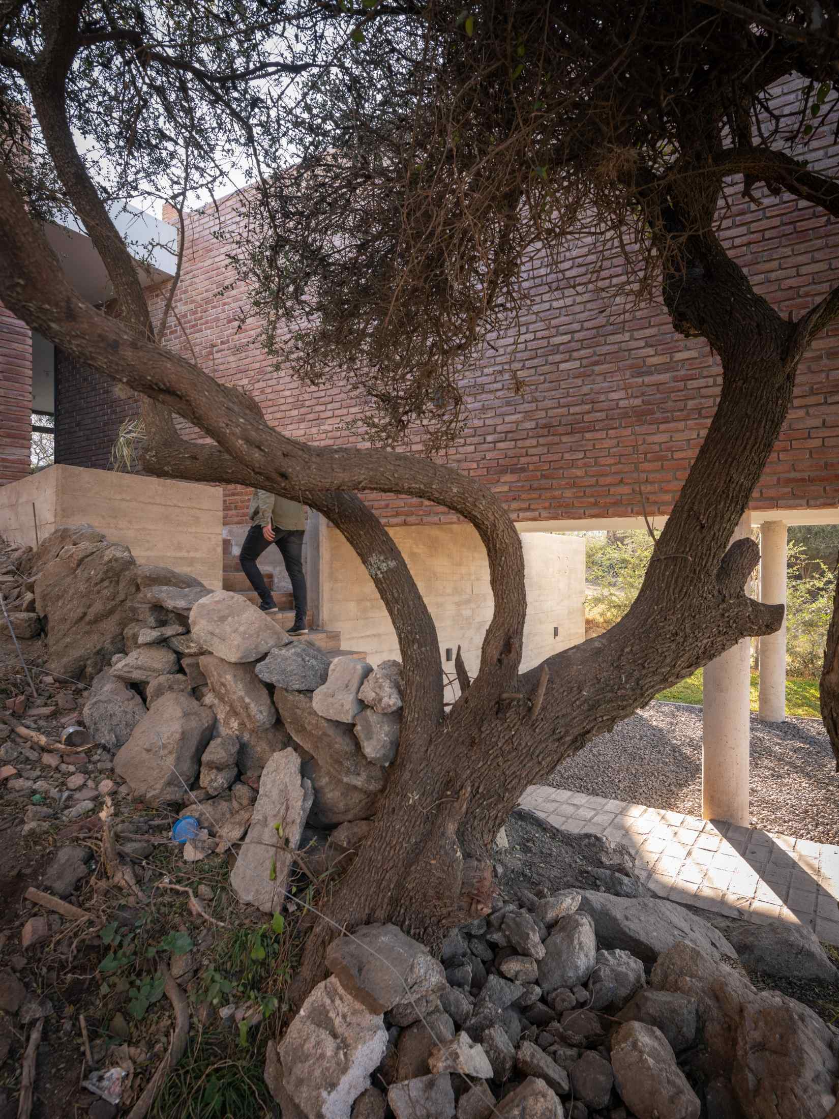 Cihlová stěna domu se stromem