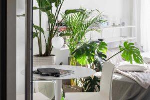 Jídelní kout s rostlinami