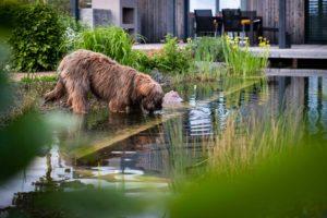 Pes v jezírku v zahradě