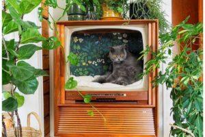 Pelech promazlíčka ze staré televize