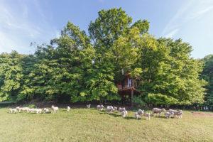 Tree House na pastvě pro ovce