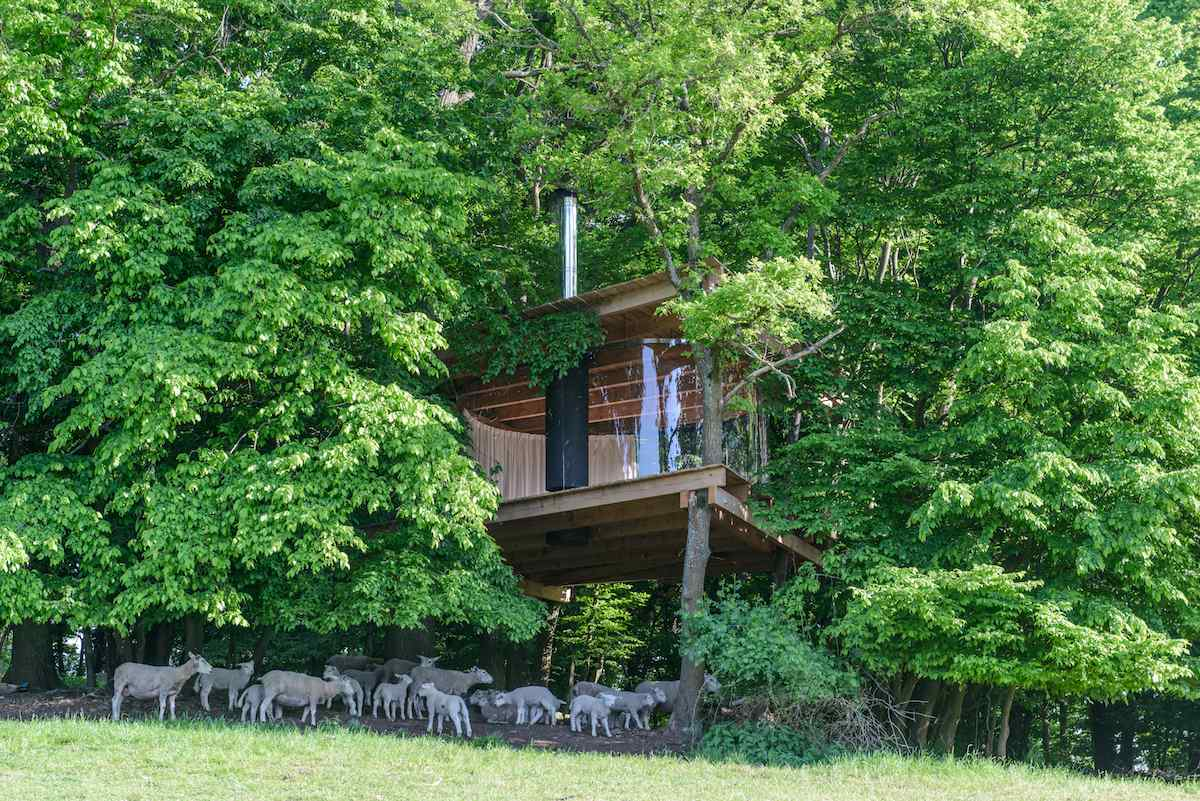 Tree house_Antonín Matějovský2