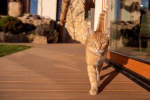 Kotě na terase