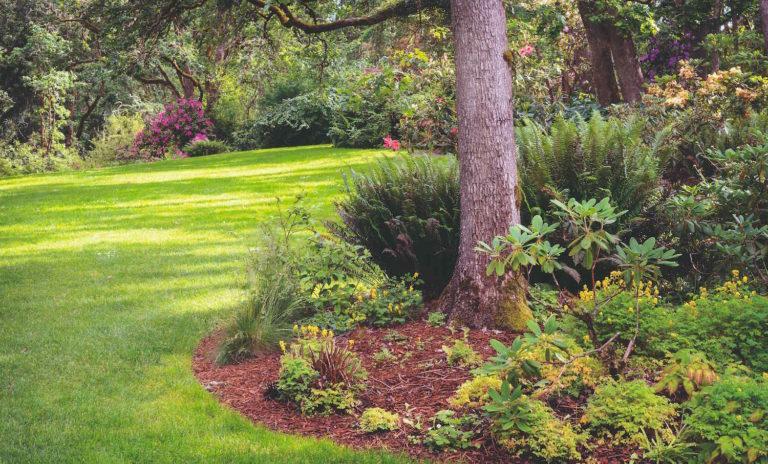 Zahrada pod korunami stromů? Známe rostliny, které tu budou nejen úspěšně růst, ale potěší i svým přitažlivým vzhledem